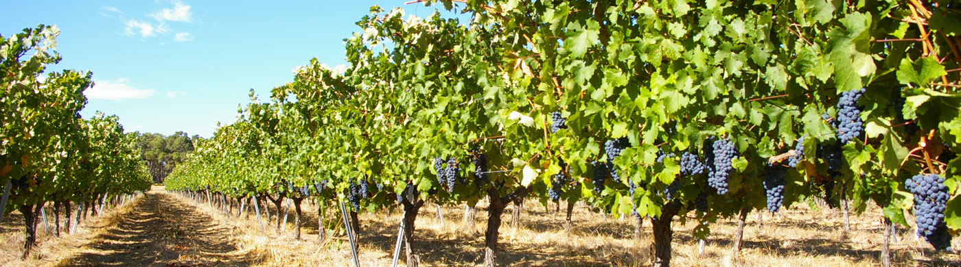 Ashbrook wines our story
